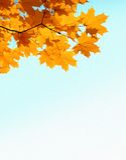 το copyspase φθινοπώρου φεύγει mapple Στοκ φωτογραφία με δικαίωμα ελεύθερης χρήσης