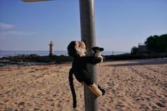 Το cWho θέλει να αφήσει την παραλία; Στοκ Εικόνες