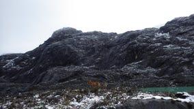 Το dingo στο δύσκολο βουνό στοκ φωτογραφίες με δικαίωμα ελεύθερης χρήσης
