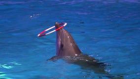 Το Dolphinarium, δελφίνι παρουσιάζει και απόδοση κατά τη διάρκεια της επίδειξης στο πάρκο νερού δελφίνια που γυρίζουν τις στεφάνε φιλμ μικρού μήκους