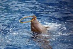 Το Dolphinarium Στοκ εικόνα με δικαίωμα ελεύθερης χρήσης