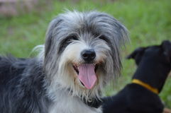 Το DonÂ't αγοράζει ένα σκυλί, υιοθετεί έναν φίλο Στοκ φωτογραφίες με δικαίωμα ελεύθερης χρήσης