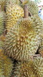 Το Durian είναι βασιλιάς των φρούτων Στοκ Εικόνες