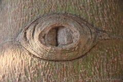 Το eyed δέντρο Στοκ εικόνες με δικαίωμα ελεύθερης χρήσης