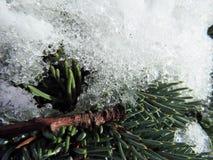 Το FIR διακλαδίζεται μακροεντολή χιονιού Στοκ Φωτογραφίες