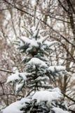 Το FIR κάτω από το χιόνι Στοκ Φωτογραφία