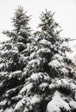 Το FIR κάτω από το χιόνι Στοκ φωτογραφία με δικαίωμα ελεύθερης χρήσης