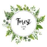 Το Floral διάνυσμα προσκαλεί το σχέδιο καρτών με την πράσινη φτέρη ευκαλύπτων leav Στοκ Εικόνες