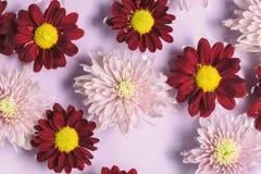 Το Floral ρόδινο και κόκκινο υπόβαθρο λουλουδιών, επίπεδο βάζει Στοκ φωτογραφίες με δικαίωμα ελεύθερης χρήσης