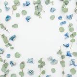Το Floral σχέδιο πλαισίων των ξηρών μπλε λουλουδιών και του ευκαλύπτου στο άσπρο υπόβαθρο, επίπεδο βάζει, τοπ άποψη λεπτομερές αν Στοκ Εικόνα