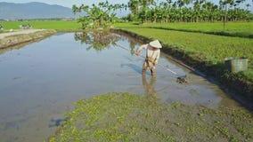 Το Flycam παρουσιάζει ασιατικό άτομο που εργάζεται σκληρά στο νερό στον τομέα σαλάτας απόθεμα βίντεο