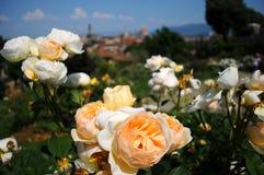 Το Giardino delle αυξήθηκε στη Φλωρεντία, Τοσκάνη, Ιταλία Στοκ Εικόνες