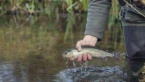 Το Grayling επίασε την αλιεία μυγών στοκ εικόνες