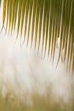 Το greeny σχέδιο Στοκ φωτογραφίες με δικαίωμα ελεύθερης χρήσης
