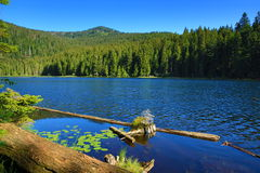 Το Großer Arbersee είναι μια λίμνη σε Bayerischer Wald, Βαυαρία, Γερμανία Στοκ φωτογραφία με δικαίωμα ελεύθερης χρήσης