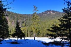Το Grosser Arber βλέπει, χειμερινό τοπίο γύρω από Bayerisch Eisenstein, χιονοδρομικό κέντρο, Βοημίας δάσος (Šumava), Γερμανία Στοκ Εικόνα
