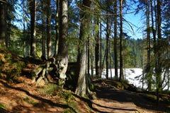 Το Grosser Arber βλέπει, χειμερινό τοπίο γύρω από Bayerisch Eisenstein, χιονοδρομικό κέντρο, Βοημίας δάσος (Šumava), Γερμανία Στοκ φωτογραφία με δικαίωμα ελεύθερης χρήσης