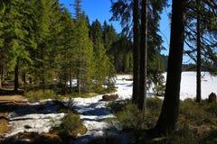 Το Grosser Arber βλέπει, χειμερινό τοπίο γύρω από Bayerisch Eisenstein, χιονοδρομικό κέντρο, Βοημίας δάσος (Šumava), Γερμανία Στοκ Εικόνες