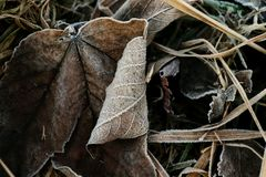 Το Hoarfrost στο καφέ βγάζει φύλλα και προέρχεται της χλόης Στοκ Εικόνες