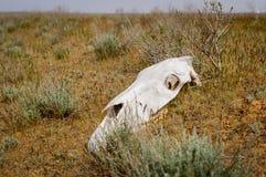 Το horse& x27 κρανίο του s στοκ φωτογραφίες με δικαίωμα ελεύθερης χρήσης