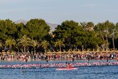 Το Ironman κολυμπά σε Alcudia Στοκ Εικόνες