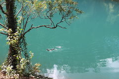 Το Jenonlan ανασκάπτει την μπλε λίμνη Στοκ Φωτογραφίες