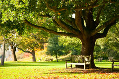 Το Kew καλλιεργεί πάρκο Στοκ Εικόνες