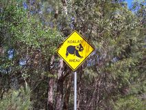 Το Koala αντέχει το σημάδι Στοκ Εικόνα