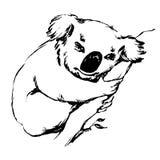 Το Koala αφορά ένα διανυσματικό γραφικό illu κλάδων Στοκ εικόνες με δικαίωμα ελεύθερης χρήσης