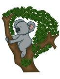 Το Koala αφορά το δέντρο Στοκ φωτογραφίες με δικαίωμα ελεύθερης χρήσης