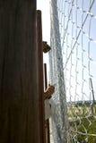 Το Laborers είναι καθιέρωση ένας φράκτης μετάλλων Στοκ φωτογραφία με δικαίωμα ελεύθερης χρήσης