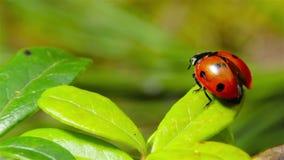 Το Ladybug απογειώνεται φιλμ μικρού μήκους