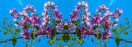 Το Lagerstroemia που ανθίζει στον κήπο Στοκ Εικόνες