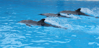 το loro δελφινιών parque εμφανίζει Στοκ φωτογραφίες με δικαίωμα ελεύθερης χρήσης