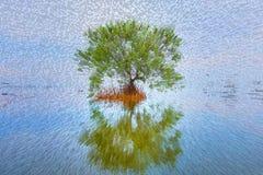 Το Lumphu στη λίμνη εξωθεί τους φραγμούς Στοκ Φωτογραφίες