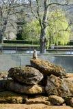 Το Meerkat κάθεται και κοιτάζει γύρω Στοκ Εικόνες