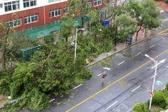 Το meranti τυφώνα που προσγειώνεται μέσα η πόλη, Κίνα Στοκ εικόνες με δικαίωμα ελεύθερης χρήσης