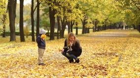 Το Mom και το παιδί συλλέγουν τα κίτρινα φύλλα στο δάσος φιλμ μικρού μήκους