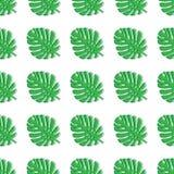 Το Monstera αφήνει πράσινος Τροπικό άνευ ραφής σχέδιο θέματος, ζούγκλα, φρεσκάδα, εξωτική Καθιερώνον τη μόδα σχέδιο για τη διακόσ διανυσματική απεικόνιση