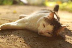 Το NAP γατών στη σιέστα βάζει στο θερινό έδαφος στοκ φωτογραφία