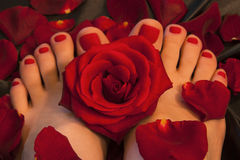 Το Pedicure με ένα κόκκινο αυξήθηκε Στοκ Εικόνες
