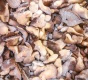 Το pleurotus μανιταριών στρειδιών Στοκ φωτογραφίες με δικαίωμα ελεύθερης χρήσης