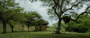 Το Pulau Rinca - Parc εθνικό Komodo - τοποθετεί στο υπόλοιπο στοκ εικόνα