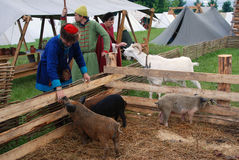 Το Reenactors παρουσιάζει δεξιότητές τους Ταΐζουν τα ζώα αγροκτημάτων Στοκ Εικόνα