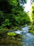 Το Riverway εισβάλλει με το πράσινο χρώμα στο βουνό Στοκ φωτογραφίες με δικαίωμα ελεύθερης χρήσης