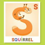 Το S είναι για το σκίουρο γράμμα s Σκίουρος , χαριτωμένη απεικόνιση διανυσματικό λευκό εικόνων ανασκόπησης αλφάβητου ζωικό Στοκ εικόνα με δικαίωμα ελεύθερης χρήσης