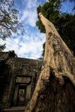 Το Siem συγκεντρώνει τον επιδρομέα τάφων Angkor Wat TA Prohm Στοκ Εικόνα