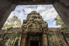 Το Siem συγκεντρώνει τον επιδρομέα τάφων Angkor Wat TA Prohm Στοκ φωτογραφίες με δικαίωμα ελεύθερης χρήσης