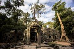 Το Siem συγκεντρώνει τον κινηματογράφο επιδρομέων τάφων Angkor Wat TA Prohm Στοκ Φωτογραφία