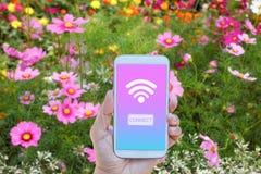 Το smartphone εκμετάλλευσης χεριών με το wifi συνδέει στοκ φωτογραφίες